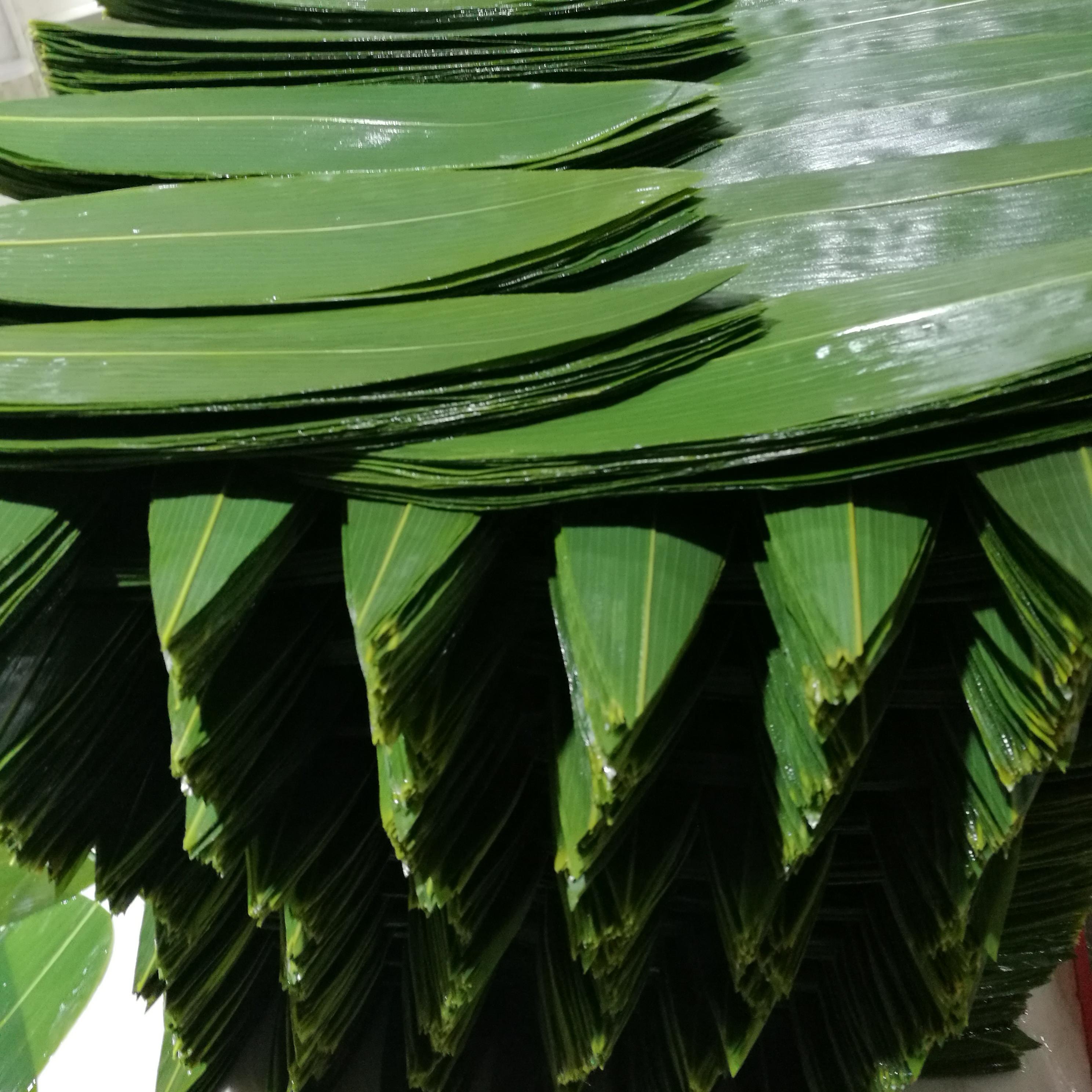 Оптовая Продажа Большой размер пищевой Натуральный Свежий суши <span class=keywords><strong>бамбуковые</strong></span> листья