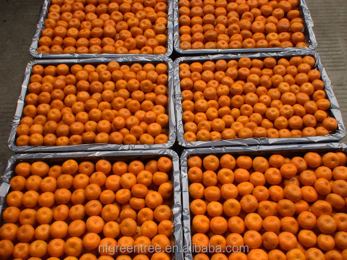 Pampas original fresh mandarin orange citrus fruit with own orchard and processing factory
