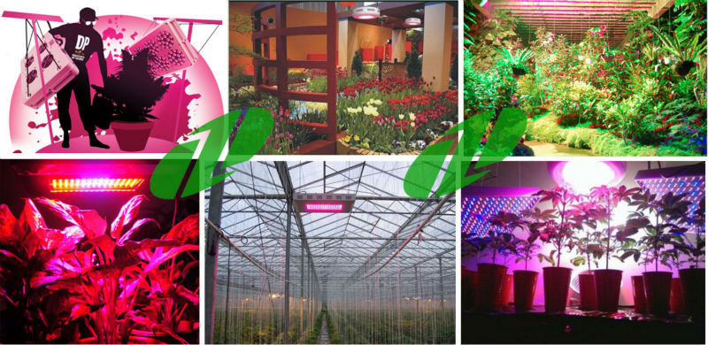 Red Blue LED Plant Grow Light Panel Hydroponic Lamp For Veg/Fruit