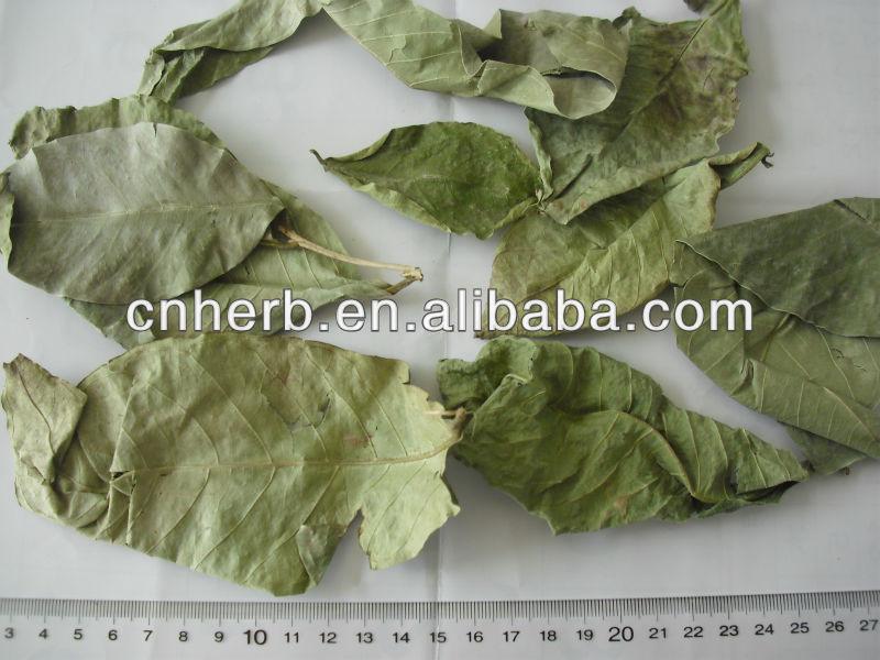 แห้งBanabaชาราชินีดอกไม้ใบไมร์เทิลเครปLager Stroemia speciosa