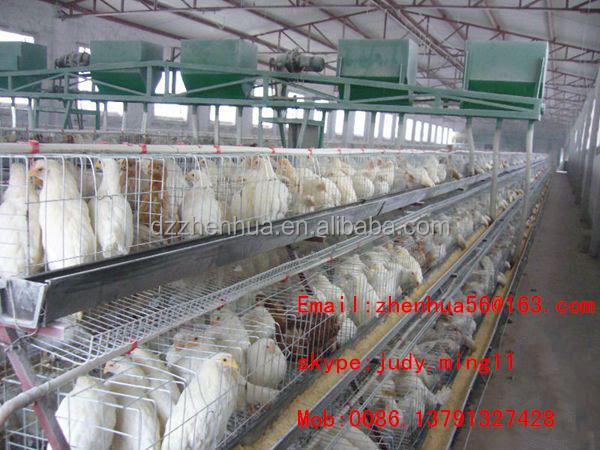 Poultry Farming in Kenya-layers Kenya Poultry Farm/poultry