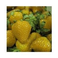 1уп 50 семена овощей фруктов семена бонсай клубники съедобные большого типа большой сладкий вкус сумка diy дома и сада