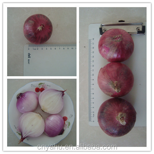 china red small onion price rate