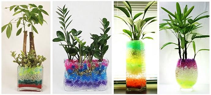 Растения для выращивания в гидрогеле 90