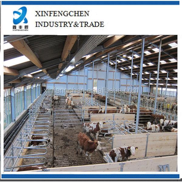 Free-stall-barn-for-cattle.jpg