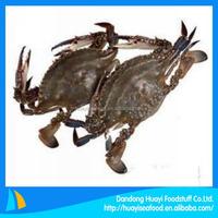 best live blue swimming crab export