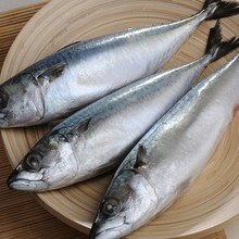 pacific Frozen mackerel, water-cooled mackerel lures the latest login