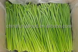Fresh garlic sprout price from China