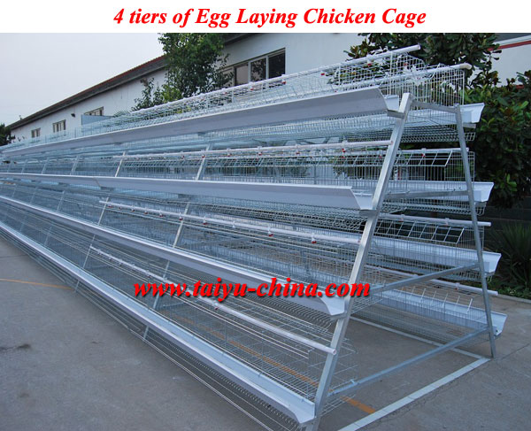 New Design Hot Sale A Type 3 Layers Egg Chicken Cage For