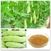 Bitter Melon Extract Elaterin 10% 20%