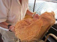 cocos de Vietnam