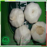 450g mesh bag , size 5.0 normal white fresh natural garlic price