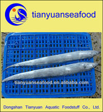 High quality frozen ribbon fish( Trichiurus haumela )