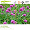 2015 Factory Supply Free Samples Kosher Halal ISO 9001 Hight Quality Red Clover Extract Powder