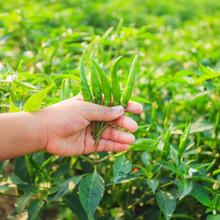 Magic Gro for Healthier Crops