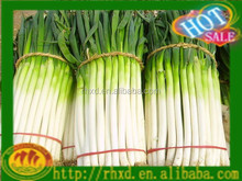 China new fresh Scallion hot sale