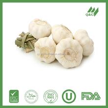 Fresh china red garlic producer