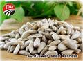 2104 nova não gmo sementes de girassol