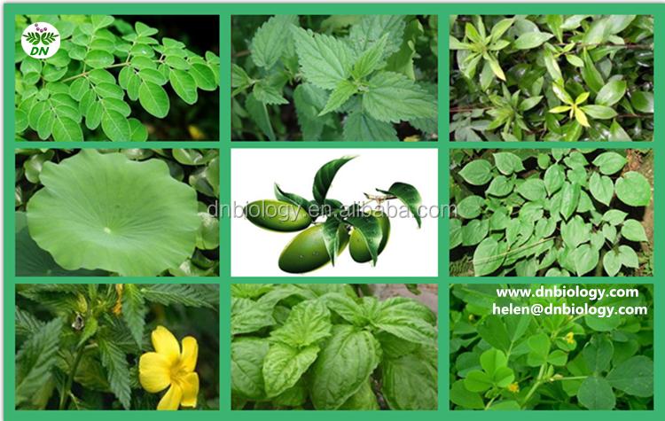 moringa leaf ectract_dd.png