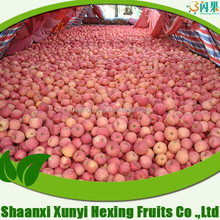 best quality sweet fuji apple/fresh red fruits/organic fuji apples in 2015