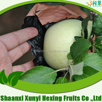 Fresh apple fruit/Chinese fresh apple/Wholesale price apple fruit