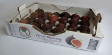 Zivdar Black Fig