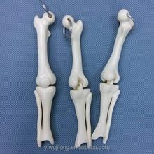 Best selling bone designs plastic key chain ballpoint pen wholesale