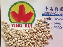 2014 new grop white kidney beans