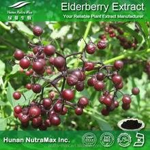 Black Elderberry Extract, Black Elderberry Extract Anthocyanidins, Black Elderberry Extract 20:1