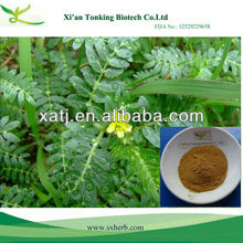Best Selling Chinese Herb Medicine tribulus terrestris extract total saponins
