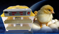 family used 96 chicken eggs incubator