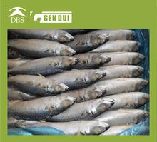 new sea frozen yellow fin tuna 3-9kg exports