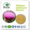 Factory 70% 80% silymarin narural milk thistle extract powder