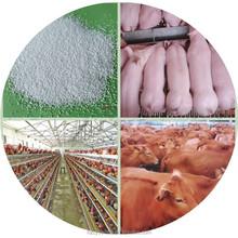 feed additive manufacturer coated sodium butyrate / organic acid / 72% animal zinc oxide