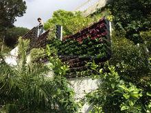SOL 2015 environment-friendly plastic vertical green wall garden vegetable box living wall planter