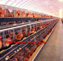 Taiyu uganda layer farm chicken cage for sale (full poultry equipment and own oversea agent)