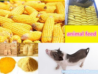 Best supplier feed grade Corn Gluten Meal 58% 60% in china with good price on sale