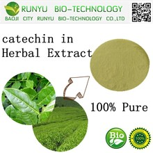 Green tea leaf plant extract powder catechin in Herbal Extract