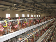 Design Egg Layer Chicken Cage From Factory