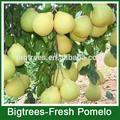 2014 frutafresca pomelo para américa del sur