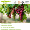 Kosher/ Halal/ ISO 9001 Certificate Water Solubility Organic Grape Seed P.E. OPC 95%