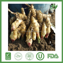 Fresh ginger import and export