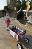 New Large Wheel Folding Cart/Cart Pusher