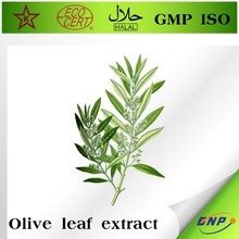 olive leaf powder extract in bulk