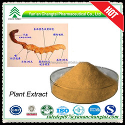 Plant extract hot sale GMP, ISO, BV factory supply natural Cordyceps Extract