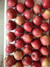 20kg red delicious apple 175/198