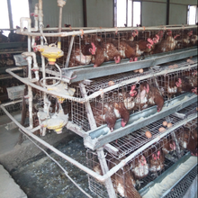 high quality chicken cage/ chicken cage for layers for sale