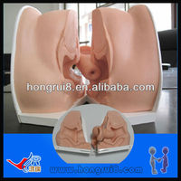 Advanced Anatomical Female Vagina Model
