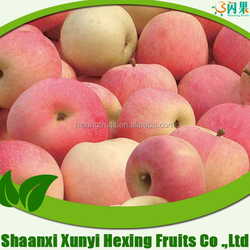 Chinese fresh royal gala apple fruit /high quality with best price
