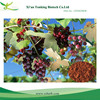 oligomeric procyanidins Organic Grape Seed P.E.